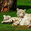 zoo-safari-w-borysewie