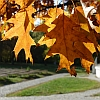 jesiennie-i-kolorowo