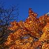 wkolo-jesien