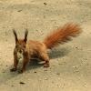 maly-rudzielec