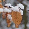 w-zimowym-lesie
