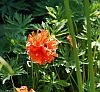 wiosna-w-ogrodzie-botanicznym-1