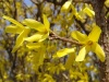 nadeszla-wiosna