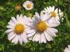 nasze-kwiaty