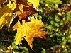 jesienny-lisc