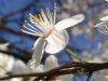kolory-wiosny-bialy
