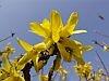kwiaty-wiosny-2