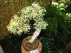 miniaturowe-drzewka-w-palmiarni