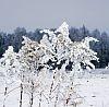 malowane-zima