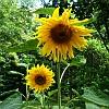 kwiaty-z-wiejskiej-zagrody